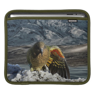 Cheeky new zealand kea mountain parrot iPad sleeve
