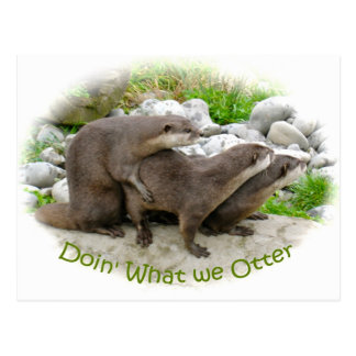 Cheeky Otters Postcard
