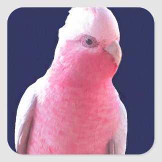 Cheeky pink and grey Australian parrot Square Stickers