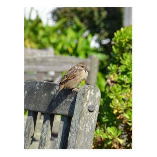 Cheeky Sparrow Postcard