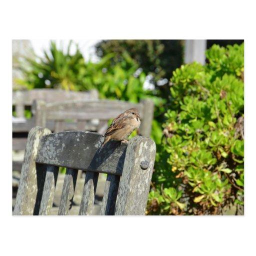 Cheeky Sparrow Postcards