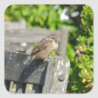 Cheeky Sparrow Square Sticker