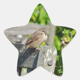 Cheeky Sparrow Star Sticker