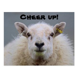 Cheer up! Funny Sheep Postcard Post Cards