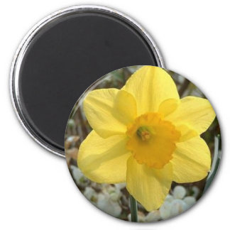 Cheerful Daffodil Magnet