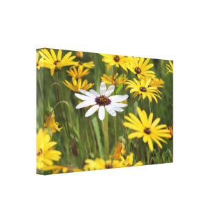 Cheerful yellow and white flowers canvas print