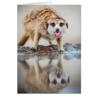 Cheers! Meerkat - Seasons Greetings Card