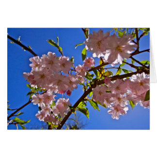 Cheery Cherry Blossoms Greeting and Note Cards