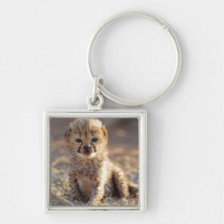 Cheetah 19 days old male cub key ring
