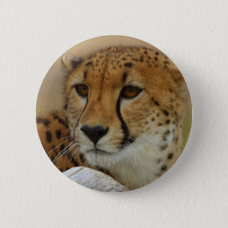 Cheetah 6 Cm Round Badge
