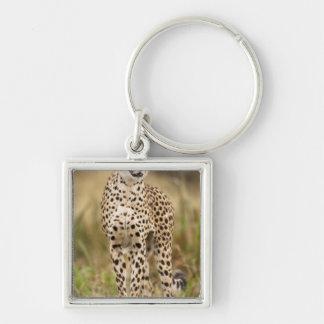 Cheetah, Acinonyx jubatus, in the Masai Mara Keychain