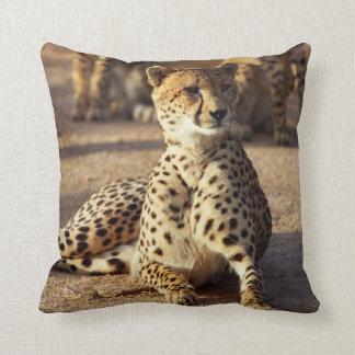 Cheetah (Acinonyx Jubatus), Kruger Natl. Park Cushion