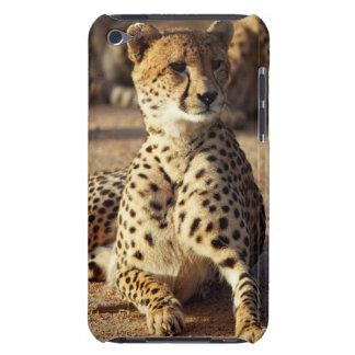 Cheetah (Acinonyx Jubatus), Kruger Natl. Park iPod Touch Case-Mate Case