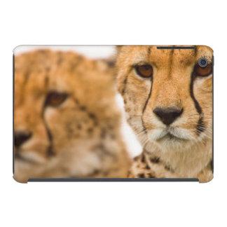 Cheetah (Acinonyx Jubatus) Mother And Cub iPad Mini Cases