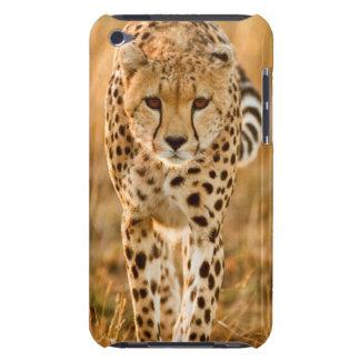 Cheetah (Acinonyx Jubatus) Portrait, Maasai Barely There iPod Cases