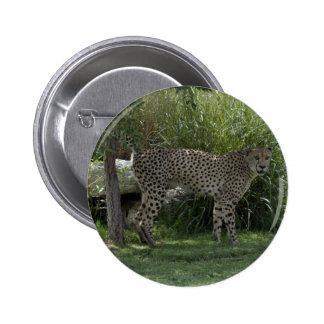 cheetah-b-6 pin