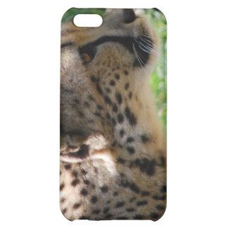 cheetah case for iPhone 5C