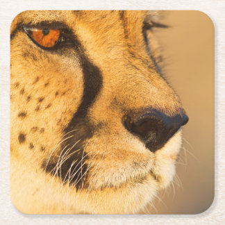 Cheetah Close-up of a female Square Paper Coaster