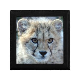 cheetah-cub10x10 gift box