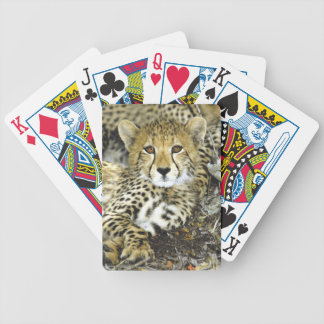 Cheetah Cub 2 Bicycle Playing Cards