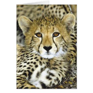 Cheetah Cub 2 Cards