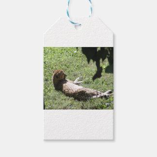 Cheetah Gift Tags