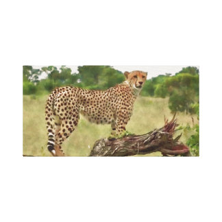 Cheetah in Africa Canvas Print