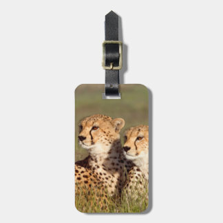 Cheetah Lying In Grass, Ngorongoro Conservation Tag For Bags