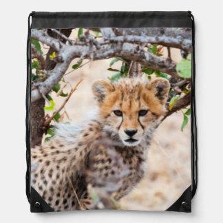Cheetah, Maasai Mara National Reserve Rucksack