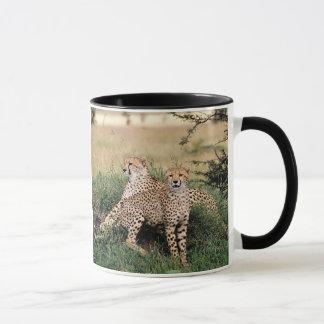 Cheetah Pair Mug
