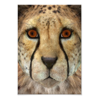 Cheetah Photo Art
