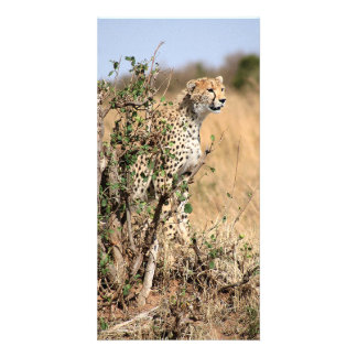 Cheetah Custom Photo Card