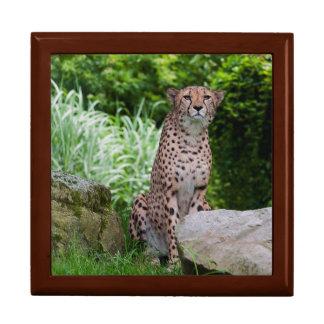 Cheetah Photo Gift Box