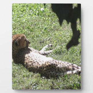 Cheetah Plaque