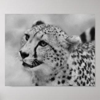 Cheetah profile poster