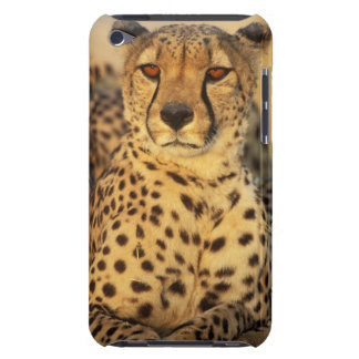 Cheetah, Resting male iPod Touch Case