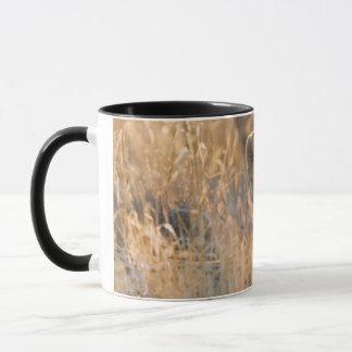 Cheetah Resting male Mug