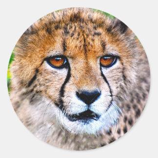 Cheetah Round Sticker