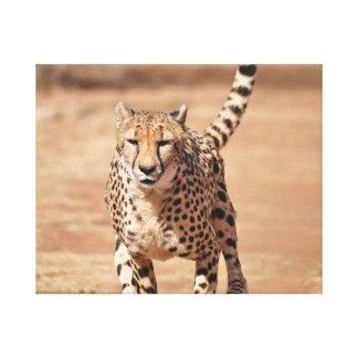 cheetah running canvas print