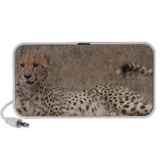 Cheetah Spots Speakers
