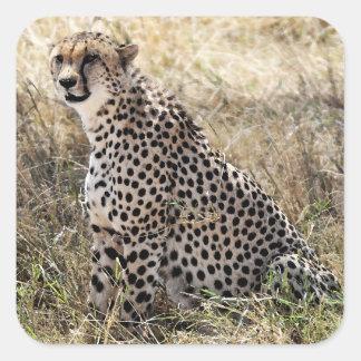 Cheetah Sticker 2