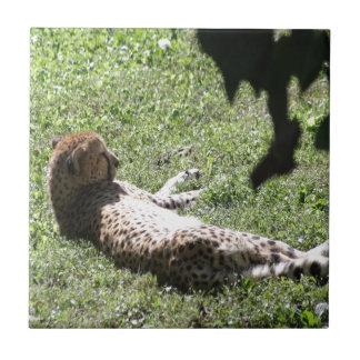 Cheetah Tile