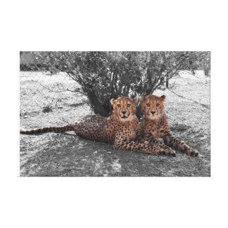 cheetah twins resting canvas print