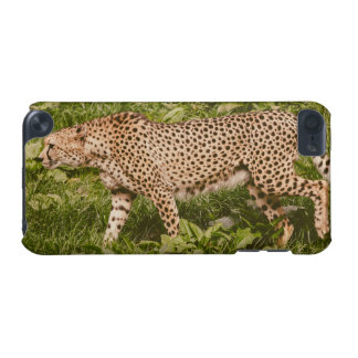 Cheetah Walking In A Field, Animal Photography iPod Touch (5th Generation) Case
