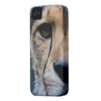 cheetah watching blackberry bold case