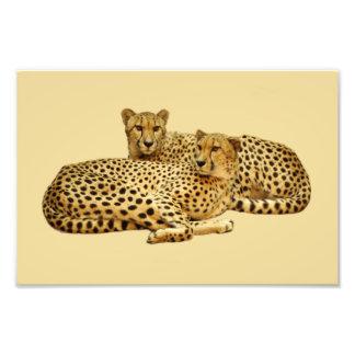 Cheetahs Art Photo