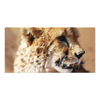 Cheetahs beauty in Africa Personalized Photo Card
