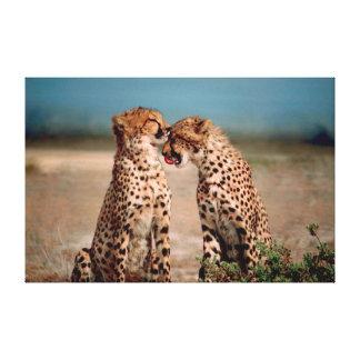 Cheetahs Canvas Print