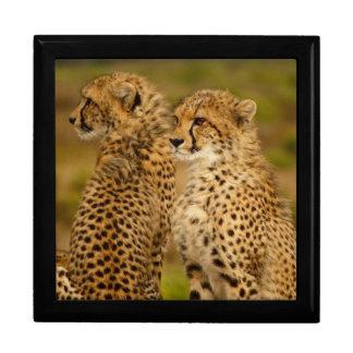 Cheetahs Gift Box