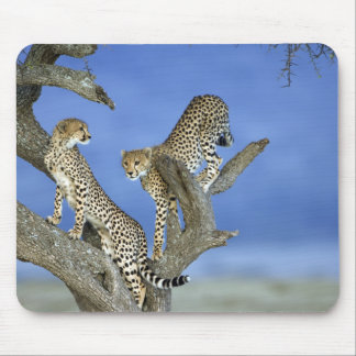 Cheetahs Mouse Pad
